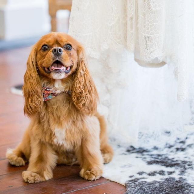 Looking to incorporate your fur-baby into your wedding day plans? Not only does our in-house market, @tobins_market welcome four legged friends, #jscevents would never want them to miss your wedding day festivities 🐶! . . . Photography • @kaitlinpoirierphotog  Venue • #jacksonstreetcottages In-house Catering • @tobins_market  Sales Team • @getintrigued